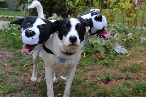 three dogs dean yeager modern magazine
