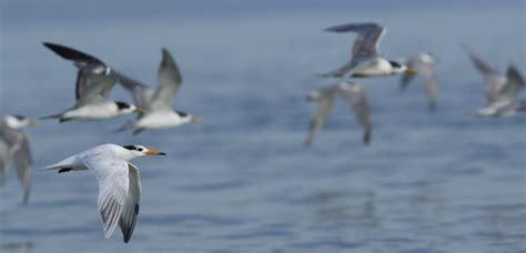 migratory birds birdlife