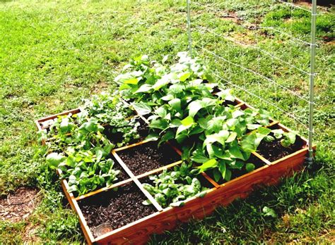 simple vegetable garden ideas for beginners homelk