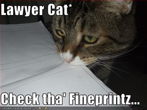 Lawyer Cat Meme - lawyer cat meme in threat to lawyer dog supremacy