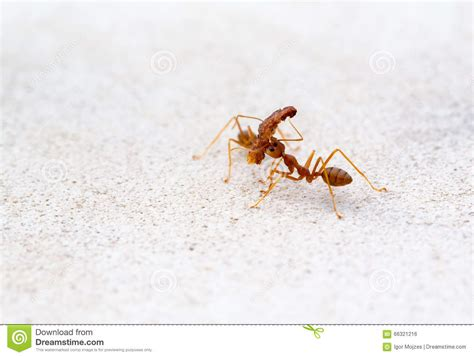 Bathroom Ideas For Decorating ants carrying heavy things
