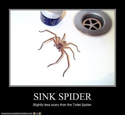 Friendly Spider Meme Picture Webfail - netlore archives spiderhugger