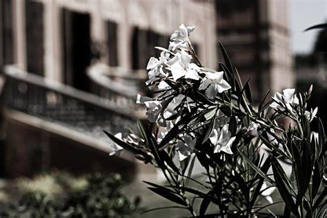 il giardino dei tigli maranello villa manodori la villa villa manodori