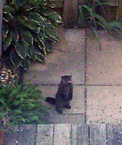 i have a groundhog in my backyard my garden i have a groundhog in my backyard