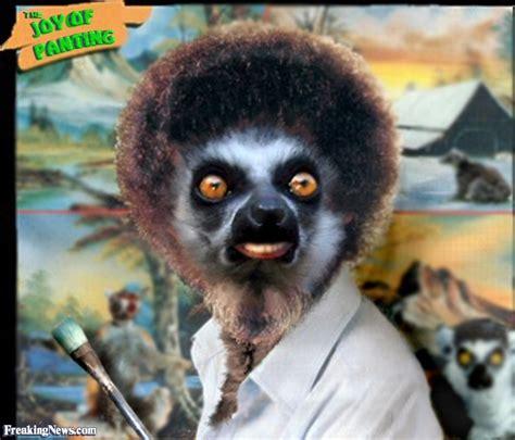 Lemur Meme - lemur pictures freaking news