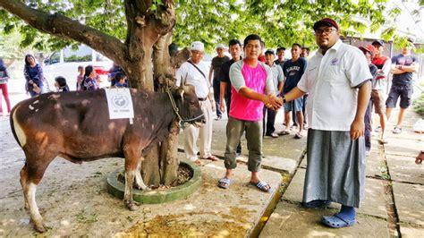 Bibit Kambing Di Bogor momen berbagi di idul adha lbh perindo kurban 1 sapi 3