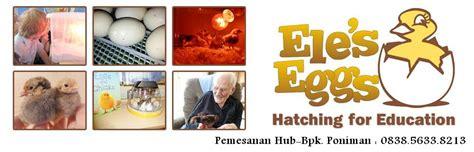 Mesin Penetas Telur Ayam Mitra Jaya mesin penetas telur otomatis mitra jaya 0838 5633 8213