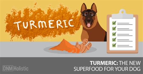 can dogs turmeric 5 ways turmeric can help your