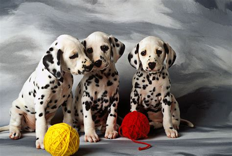 dalmatians puppies three dalmatian puppies by garry