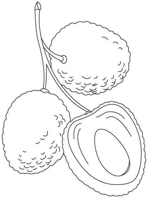 lychee fruit drawing lychee coloring pages download and print lychee coloring