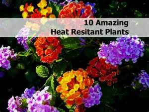 10 amazing heat resistant plants