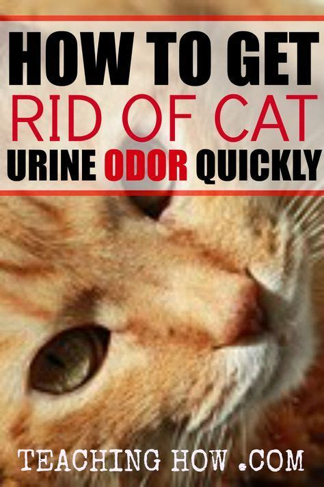 how to get rid of pee smell in bathroom 25 best ideas about urine odor on pinterest pet urine