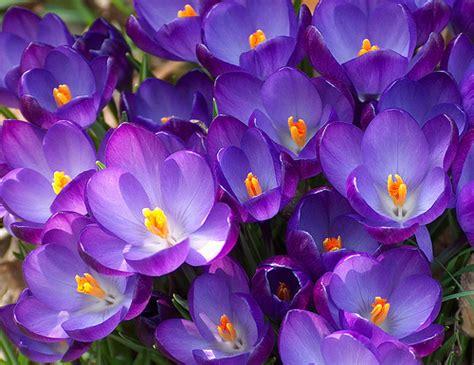 fiori di marzo fiori di marzo