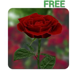 rose themes live 3d rose live wallpaper free android apps on google play