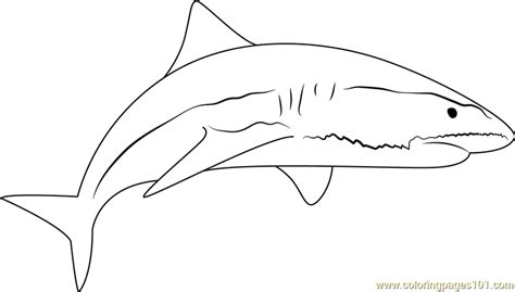sand shark coloring page sand tiger shark coloring pages sketch coloring page