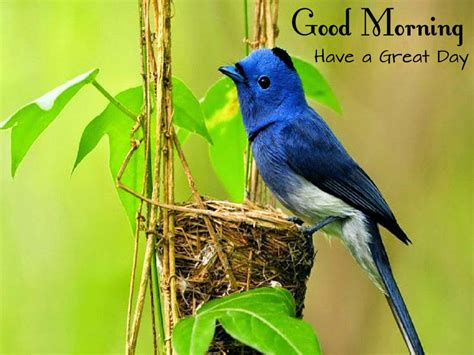 loving2you beautiful nice and lovely birds images