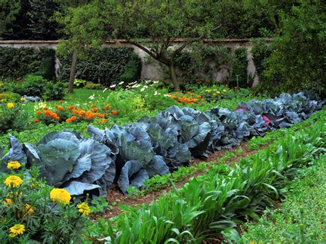 Plants Vegetable Garden Design A Classic Produce Garden Grow A Vegetable Garden
