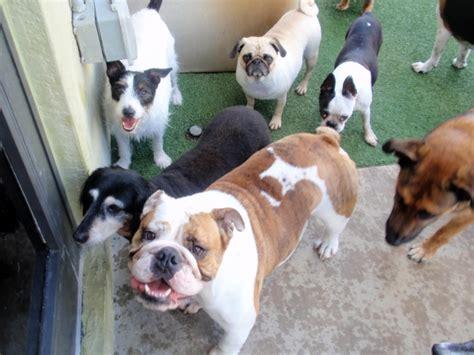 lush puppy lush puppy pet resort and spa in jupiter florida fl