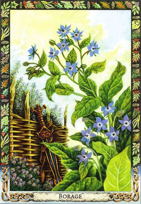 libro the druid plant oracle 10 best images about the druid oracle cards on its meaning wisdom and the force