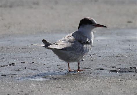new england coastal birds rhode island salt ponds
