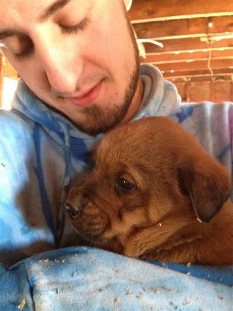 puppy adoption st louis puppy rescue in east st louis gateway pet guardians
