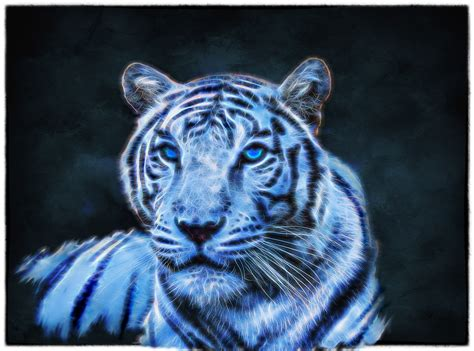 Blue Tiger blue tiger by doerte pavlik bridge lake photo
