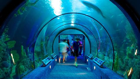 moody gardens houston attraction expedia au