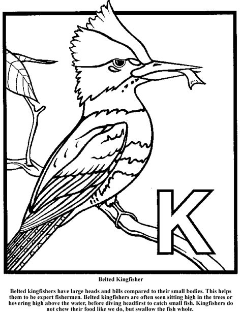 kingfisher coloring pages 85 kingfisher bird coloring page click the