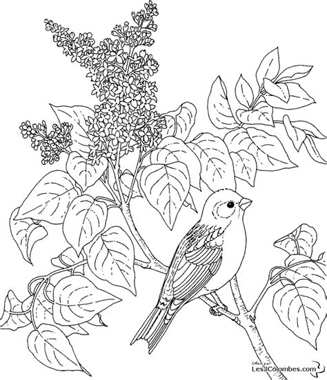 coloring pages of birds and butterflies coloriage fleur oiseau du paradis