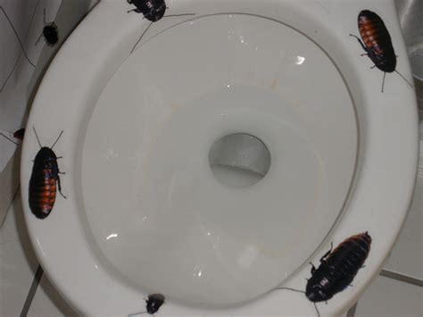 cockroaches in bathroom cockroach bathroom flickr photo sharing
