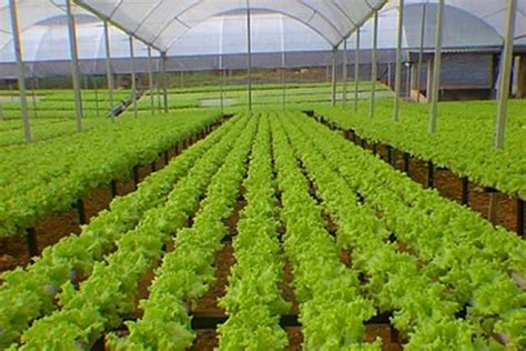imagenes satelitales para agricultura agricultura no sudeste do brasil meio ambiente cultura mix