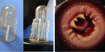 These female condoms have sharp teeth to prevent rape first to know