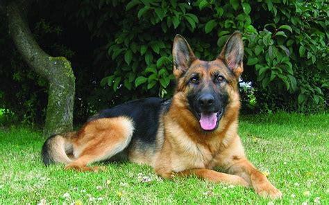 abotonada por un perro videos de zoofilia mujer zoofilia abotonada con su perro full