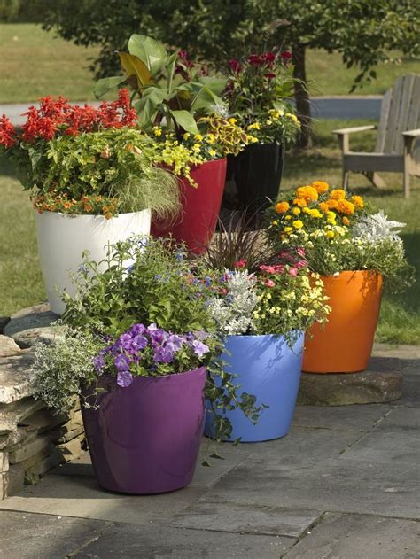 images of 6 flowers in pots 25 best ideas about self watering pots on self watering plastic water containers