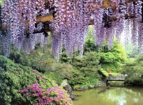 Flower Garden Japan Wisteria Rakusuien Garden Kyoto Flowers Garden Gardens Japan Nature Photography Wisteria