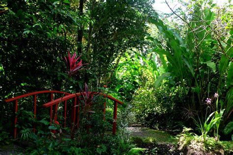 St Lucia Botanical Gardens My Garden St Lucia Botanical Gardens