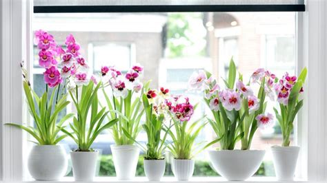 plantas para patio interior fichas de plantas de interior y exterior