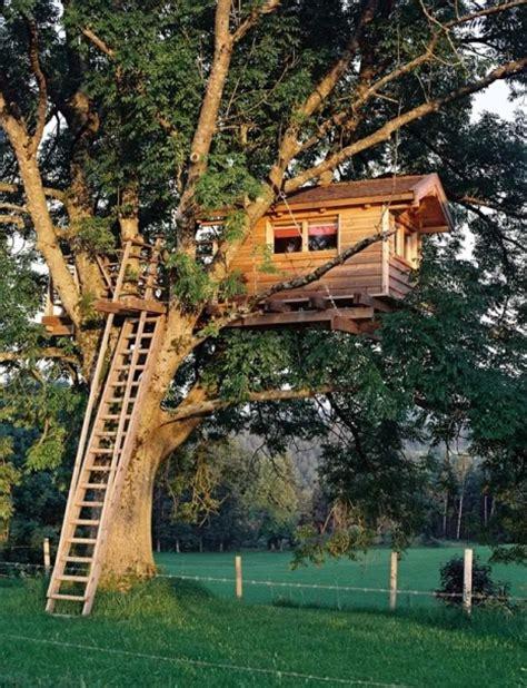 sugli alberi sugli alberi 35 foto bonkaday