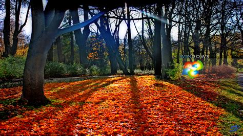 microsoft themes autumn fall wallpapers for windows 7 wallpapersafari