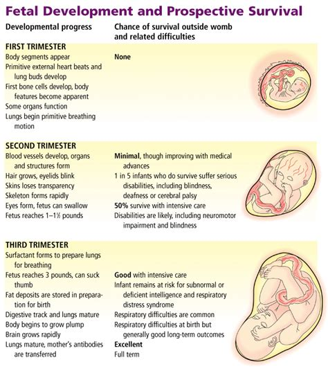 embryo development stages car interior design