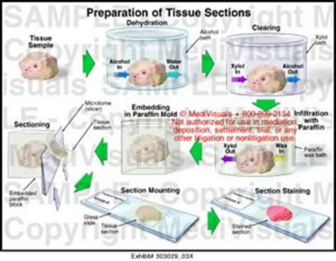 tissue sectioning methods medivisuals preparation of tissue sections medical