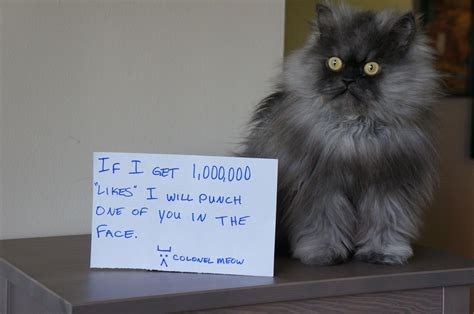Colonel Meow Memes - image 515022 colonel meow know your meme