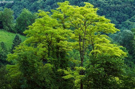 Ah Dada Sur Mon Bidet by Couleur Vert Tendre 28 Images Peinture Une Couleur