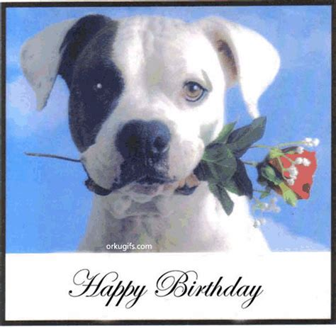 happy birthday puppy gif happy birthday gif graphics comments and images for orkut hi5