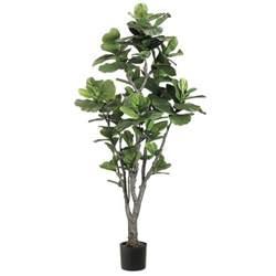5 5 foot fiddle leaf fig tree potted ltf706 gr