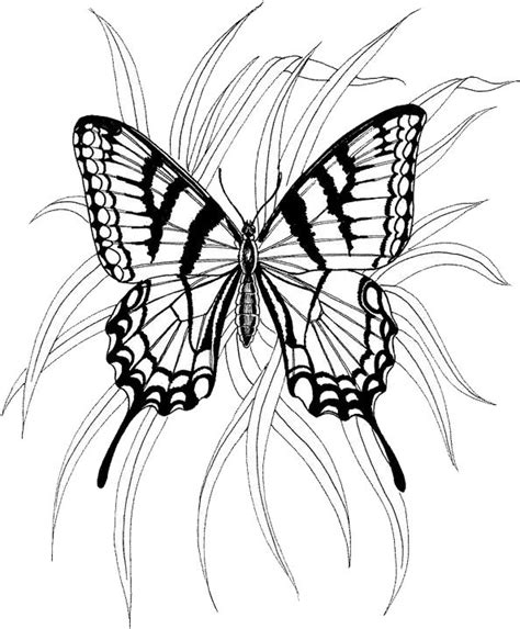 christian butterfly coloring pages 17 best images about wood burning on pinterest wood