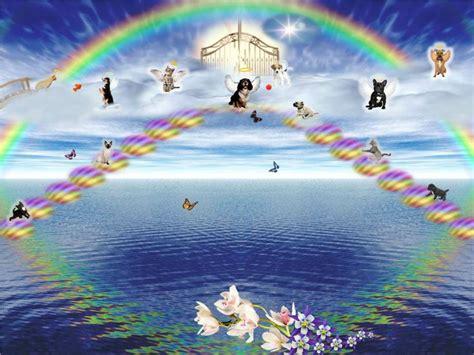 2219 best rainbow bridge images on quote 28 best pet loss images on doggies rainbow