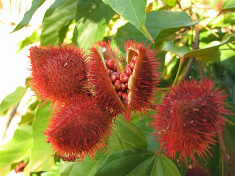 achiote and chaya spices of the riviera maya