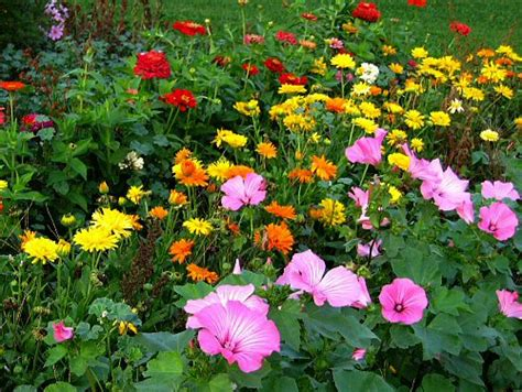 Pretty Flower Gardens Wallpapers Hd Wallpapers Beautiful Flower Garden