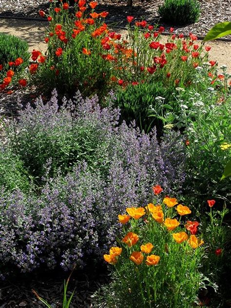 Flower Gardens In California Best 25 California Garden Ideas On California Plants California